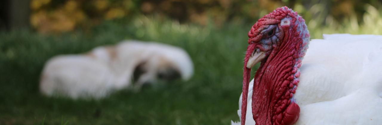 Puter und Hund
