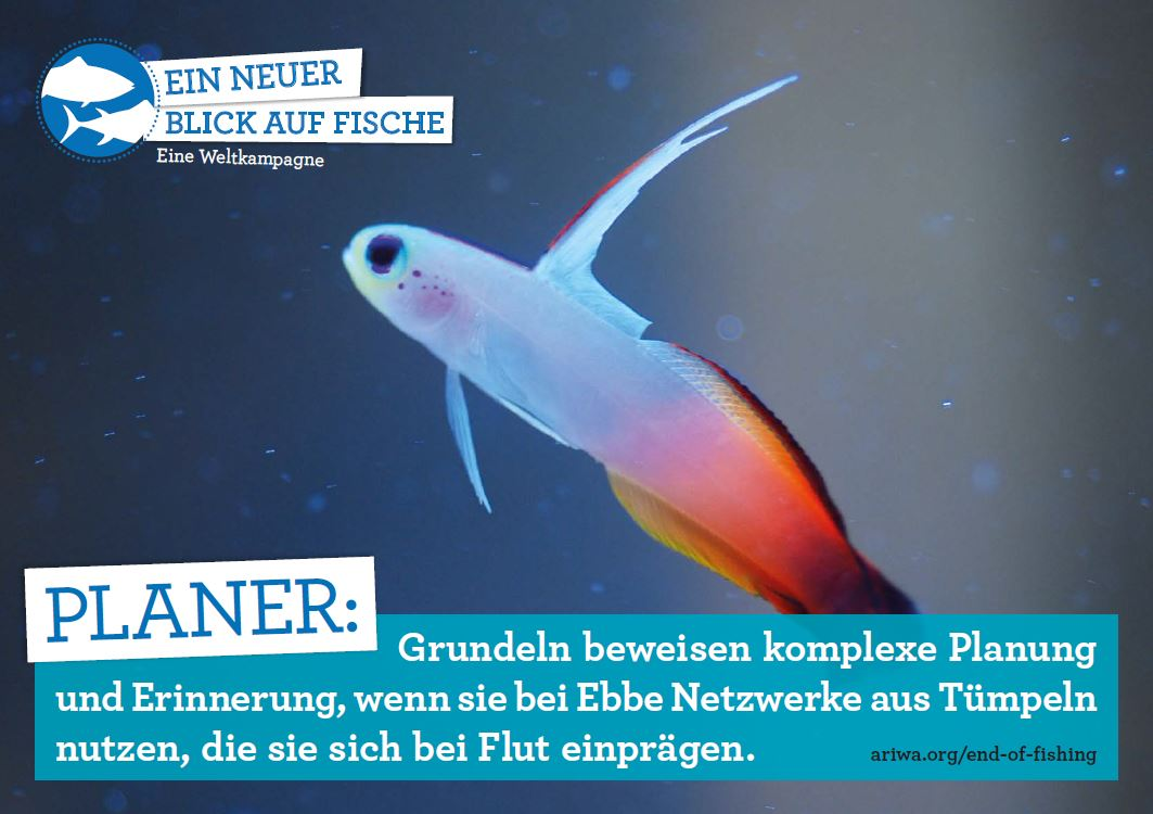 Ein neuer Blick auf Fische