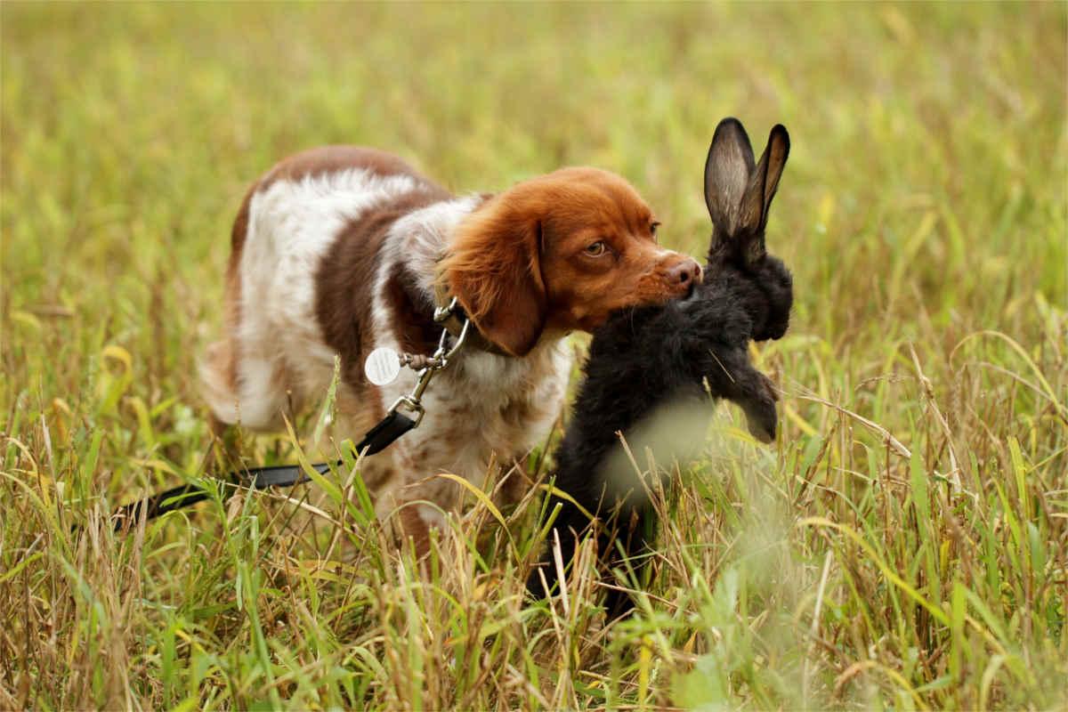 Jagd mit Hund
