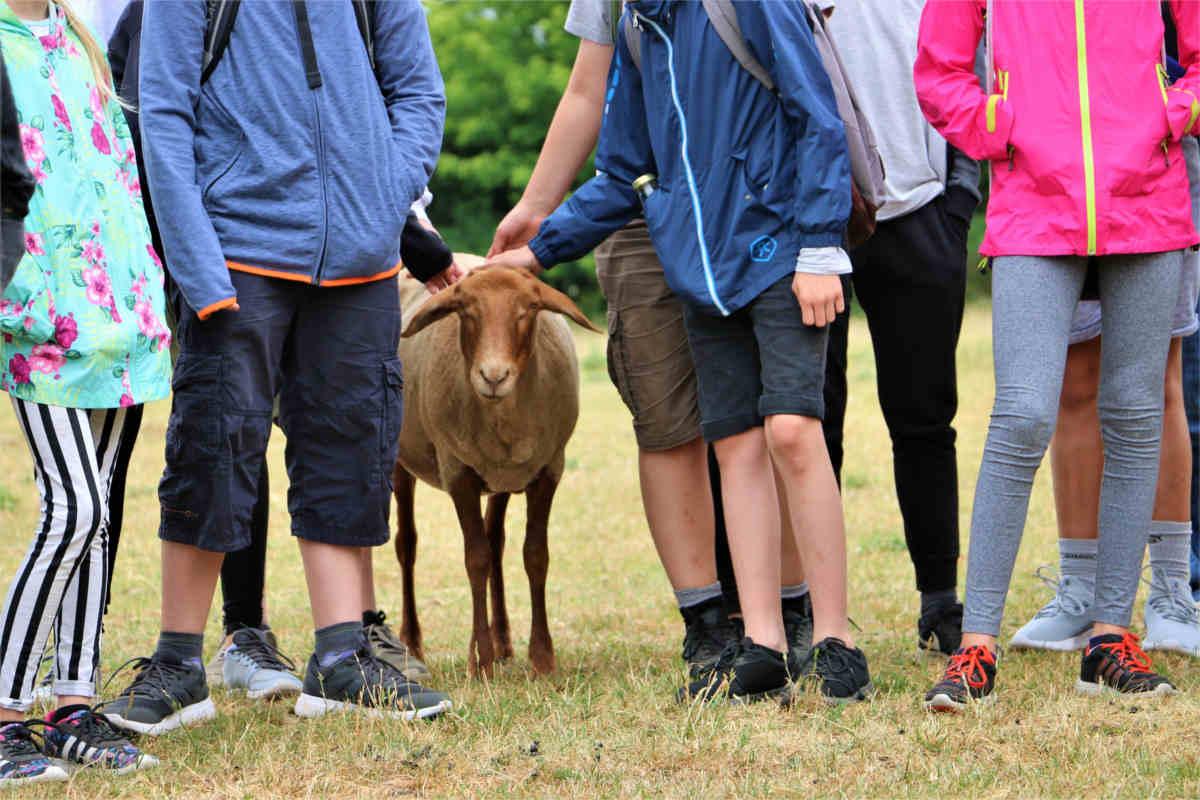 Kinder mit Schaf