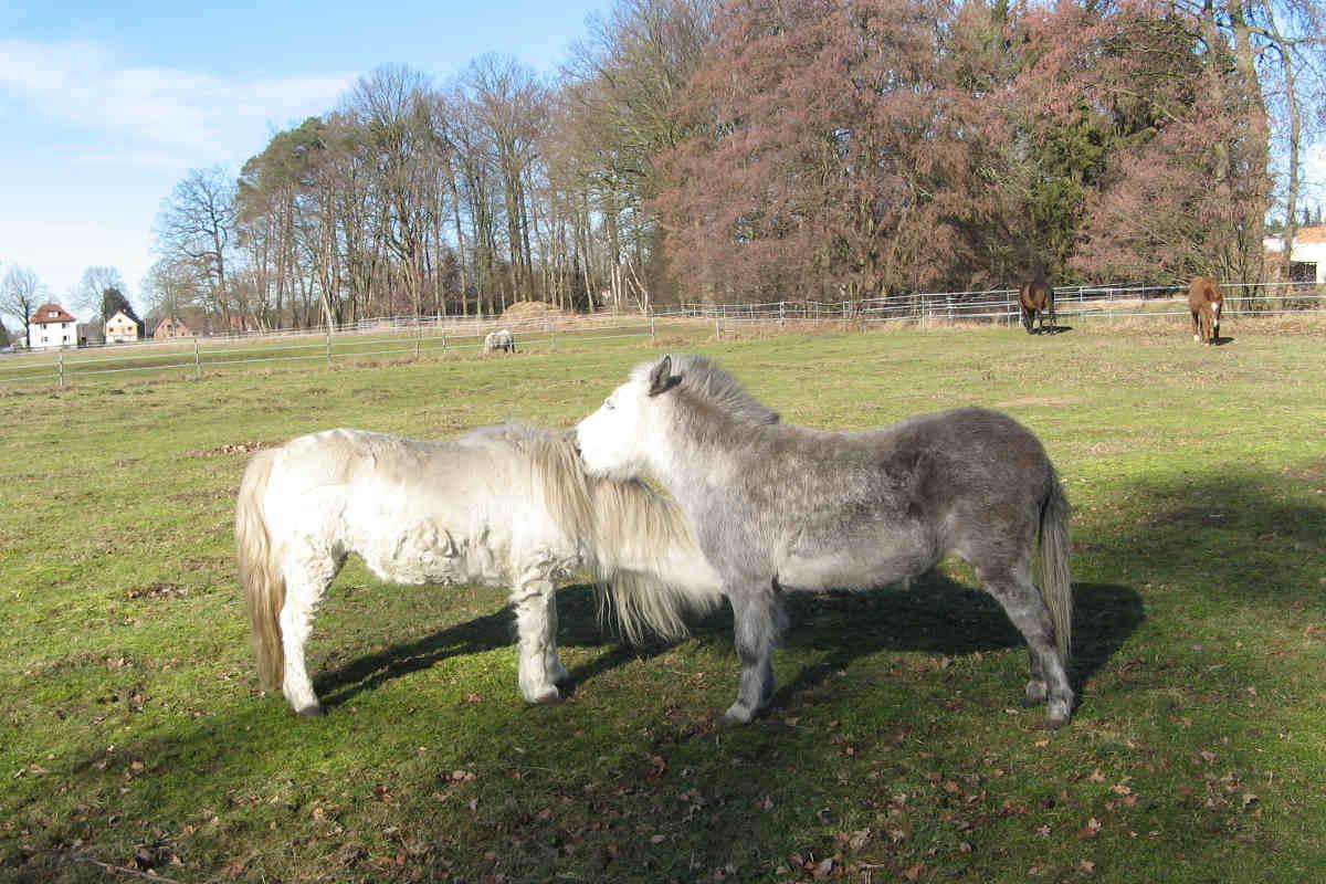 Pflegestelle der ARIWA-Mulis und Ponnys