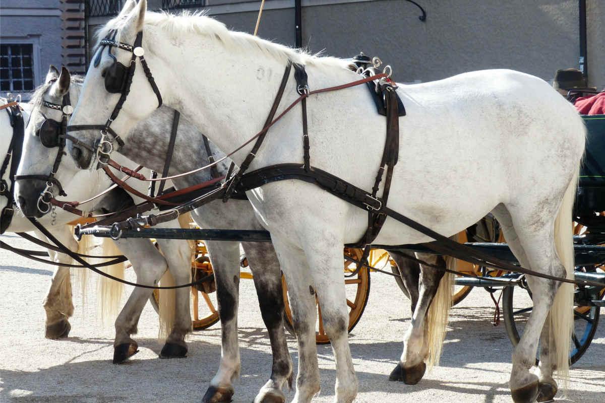 Pferdekutschen