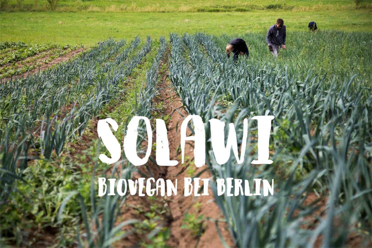 bio-vegane SoLaWi Plantage