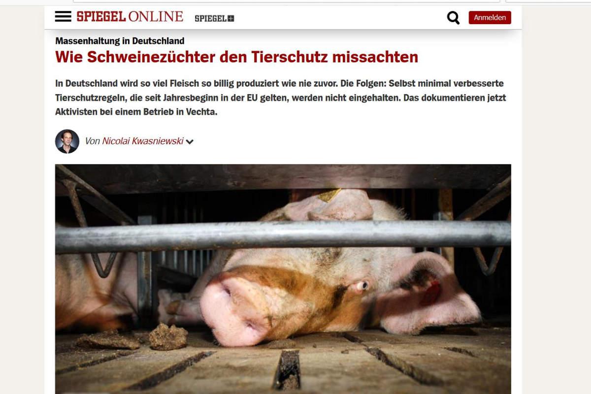 2013 Spiegel online Schweinezucht