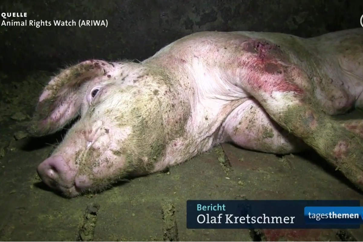 ariwa-2014-ard-tagesthemen-extremfall