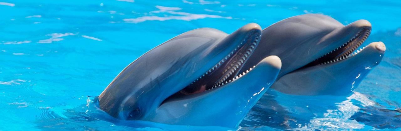 Delphine in Delphinarium