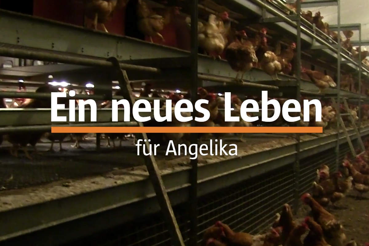 Hühnerbefreiung