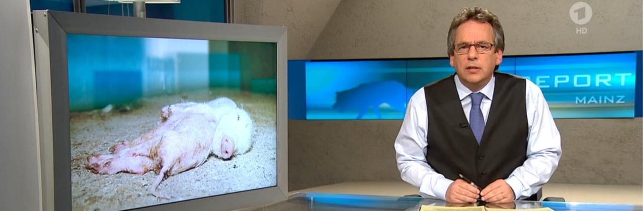 ariwa-presse-und-tv