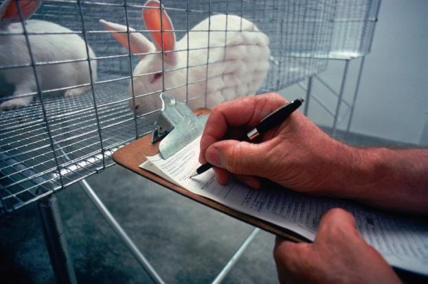 Kaninchen in Laborkäfig