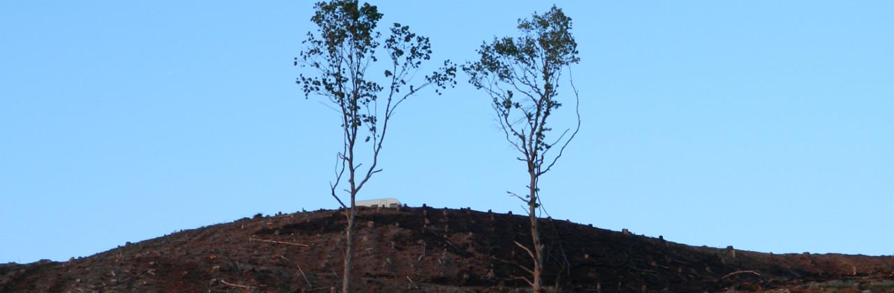 Regenwaldabholzung