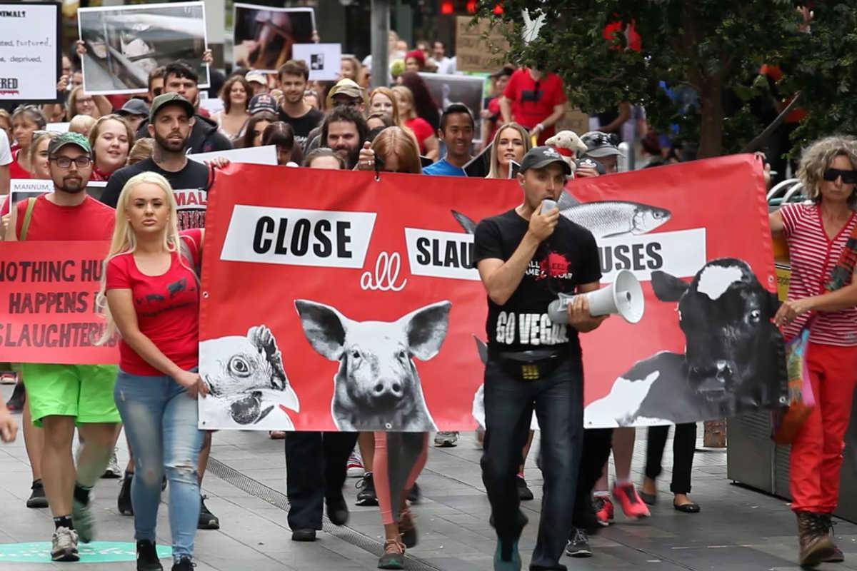 Schließung aller Schlachthäuser in Adelaide 2017