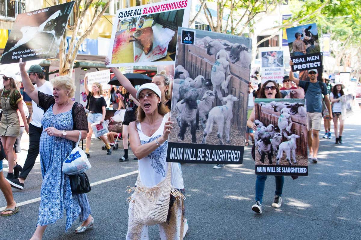 Schließung aller Schlachthäuser in Brisbane 2017