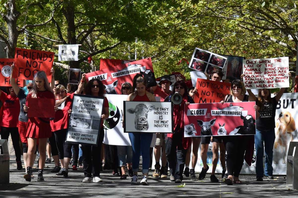 Schließung aller Schlachthäuser in Canberra 2017