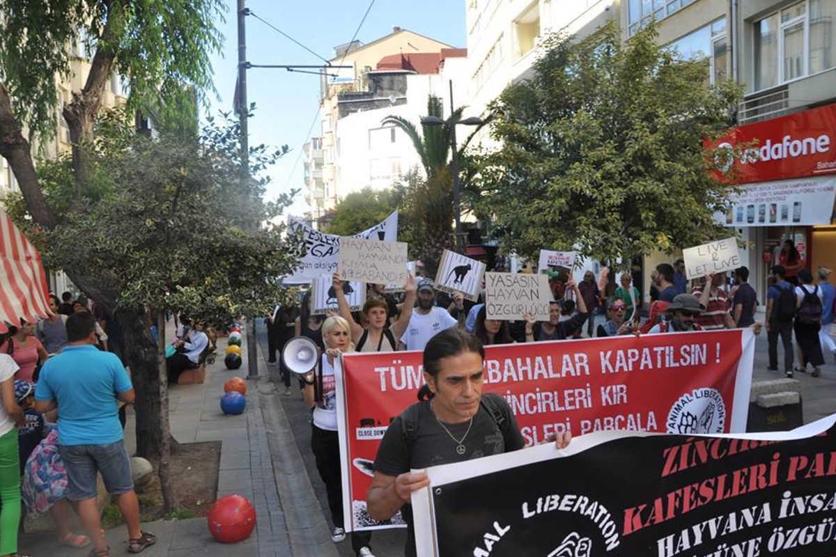 Schließung aller Schlachthäuser in Istanbul 2016