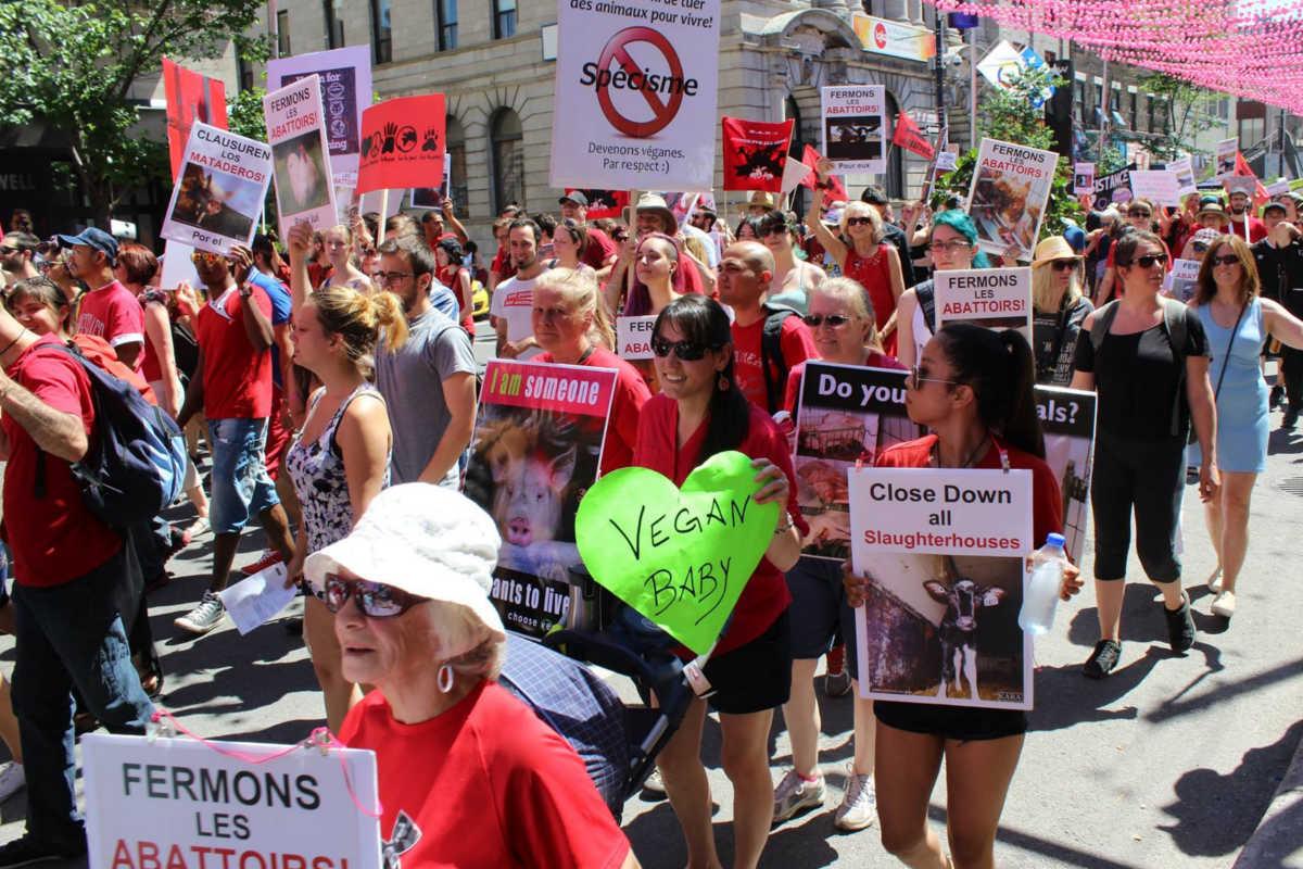 Schließung aller Schlachthäuser in Montreal 2016