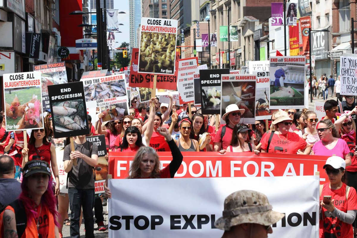 Schließung aller Schlachthäuser in Toronto 2017