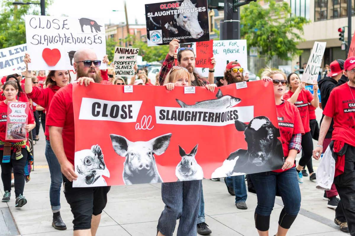Schließung aller Schlachthäuser in Okanagan 2018