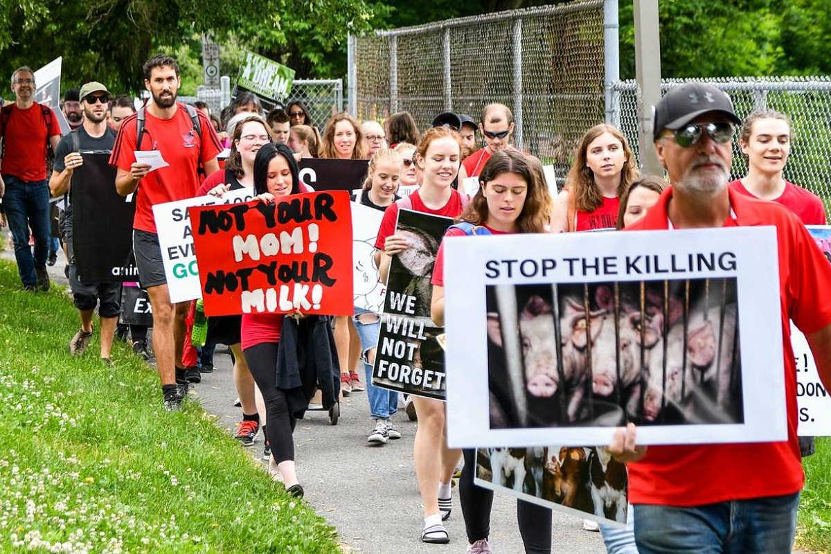 Schließung aller Schlachthäuser in Ottawa 2018