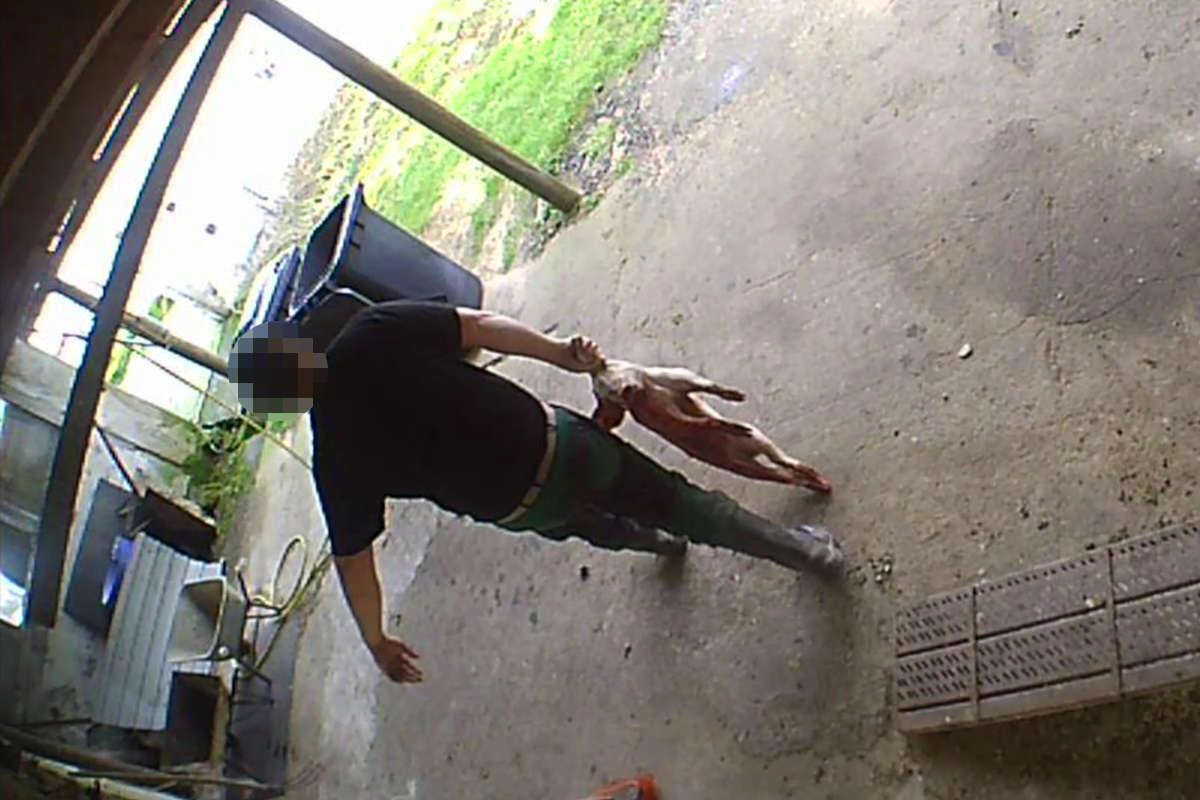 tote Läufer werden in Kadavertonne geworfen