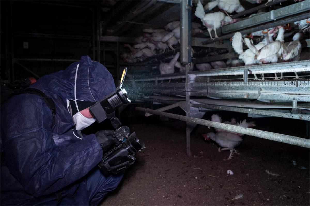 Aktivistin filmt Bio-Hennen