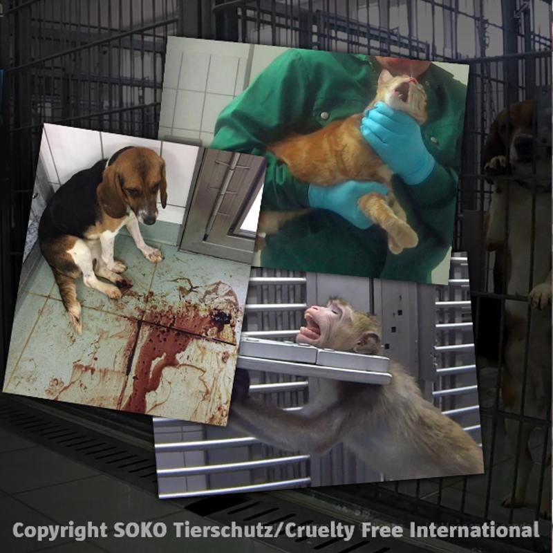 LPT Schließen! Mahnwache gegen Tierversuche