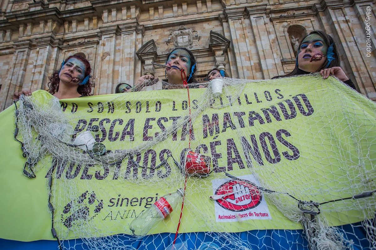 End Fishing Bogota