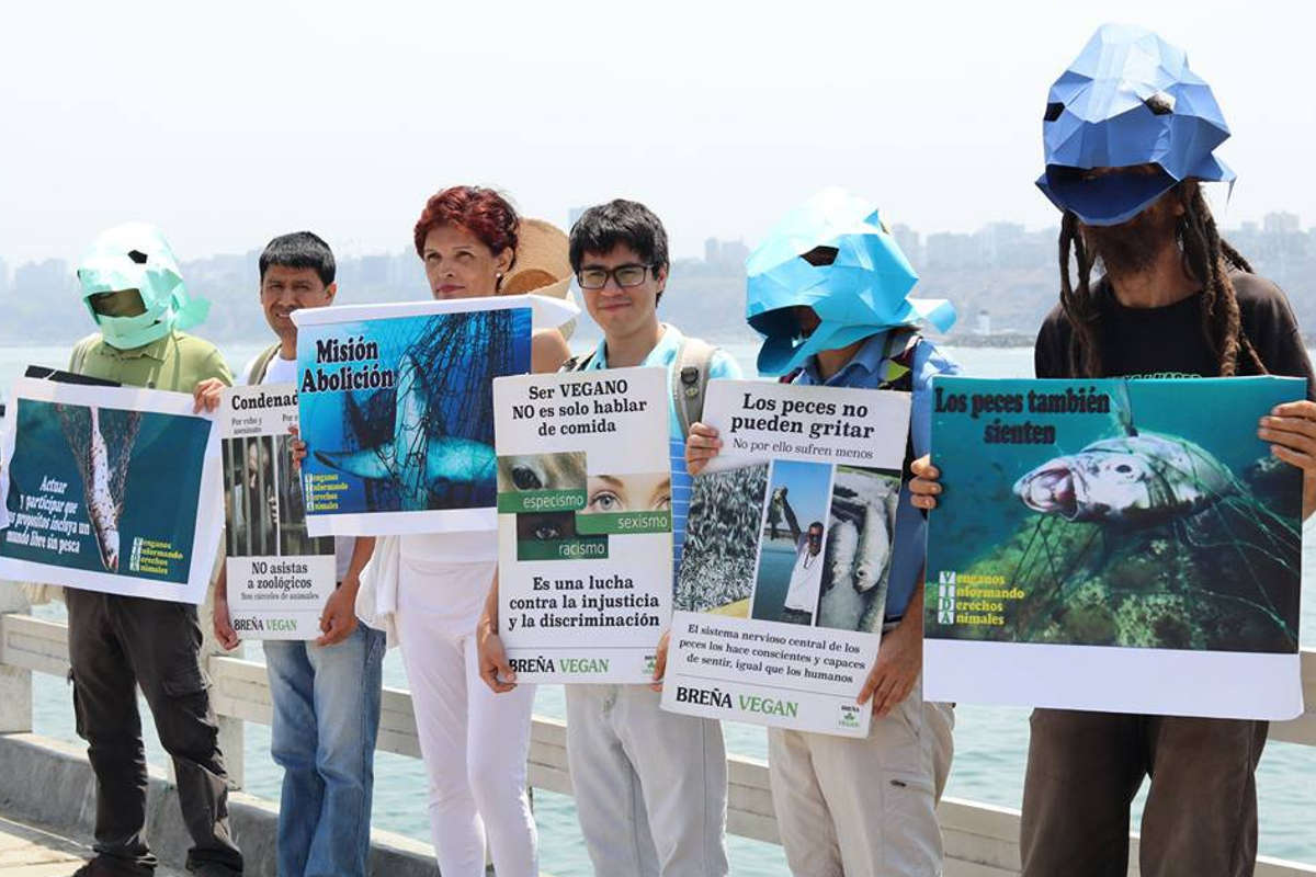 End Fishing Lima