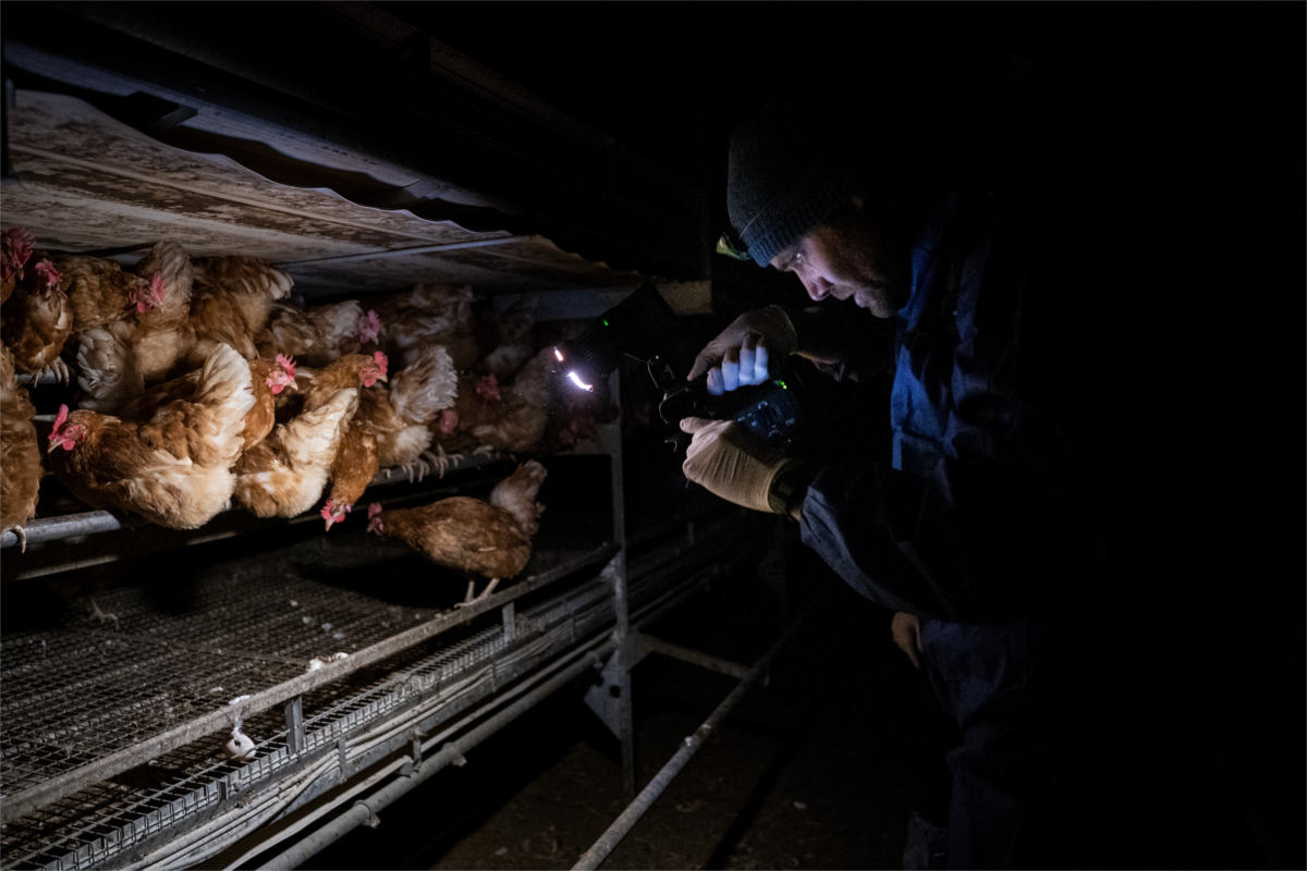 Aktivist filmt Hennen