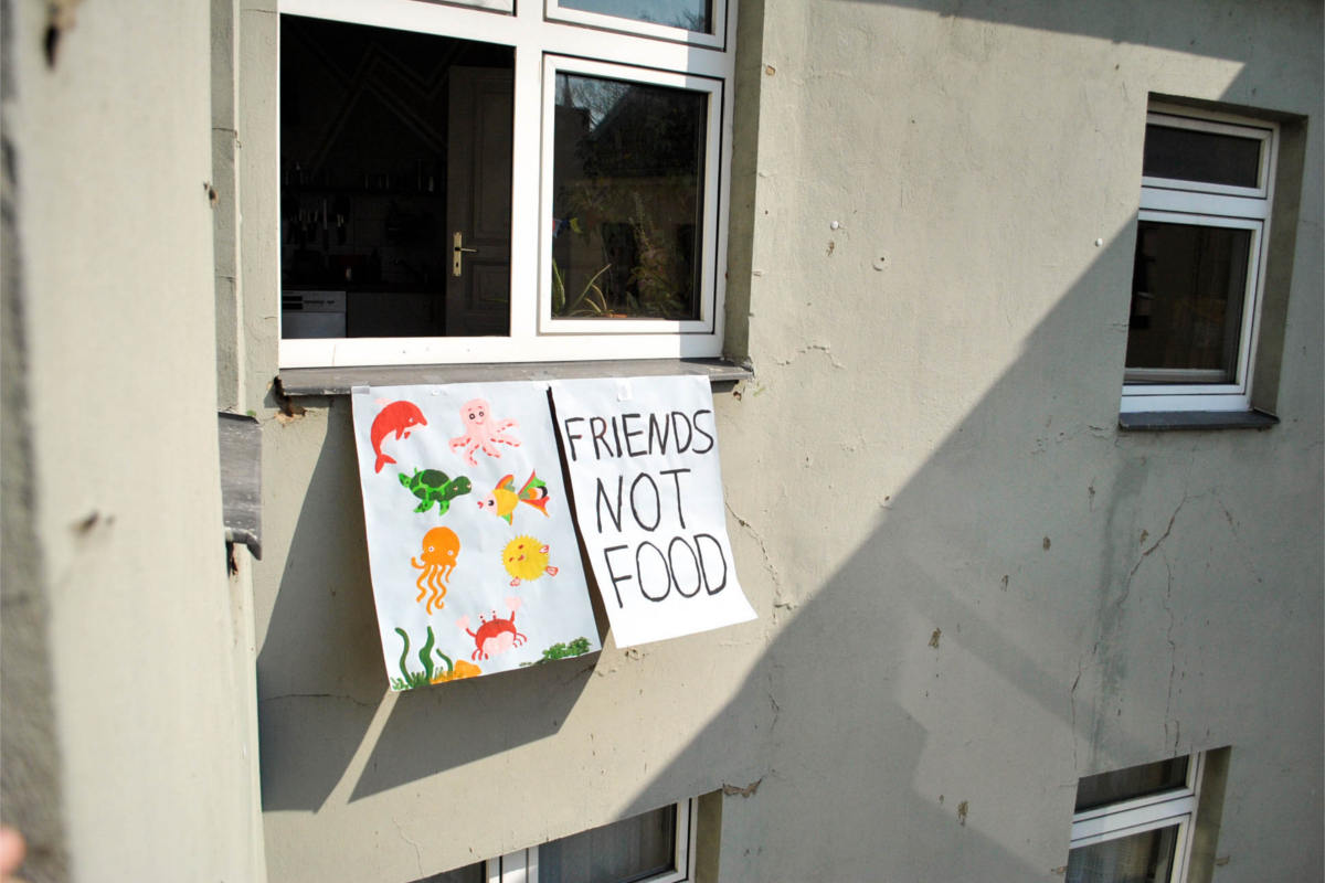 Plakat an Fenster