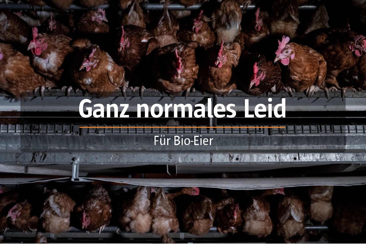 Bio-Hennen