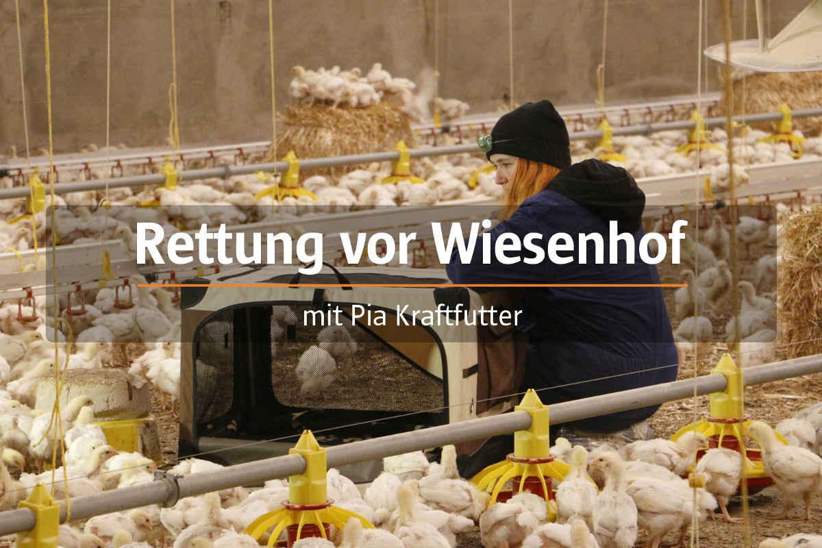 "Aktivistin in ""Hühnermast"""