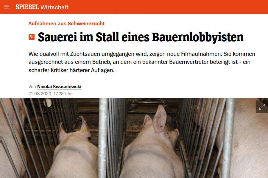 Spiegel TV Artikel