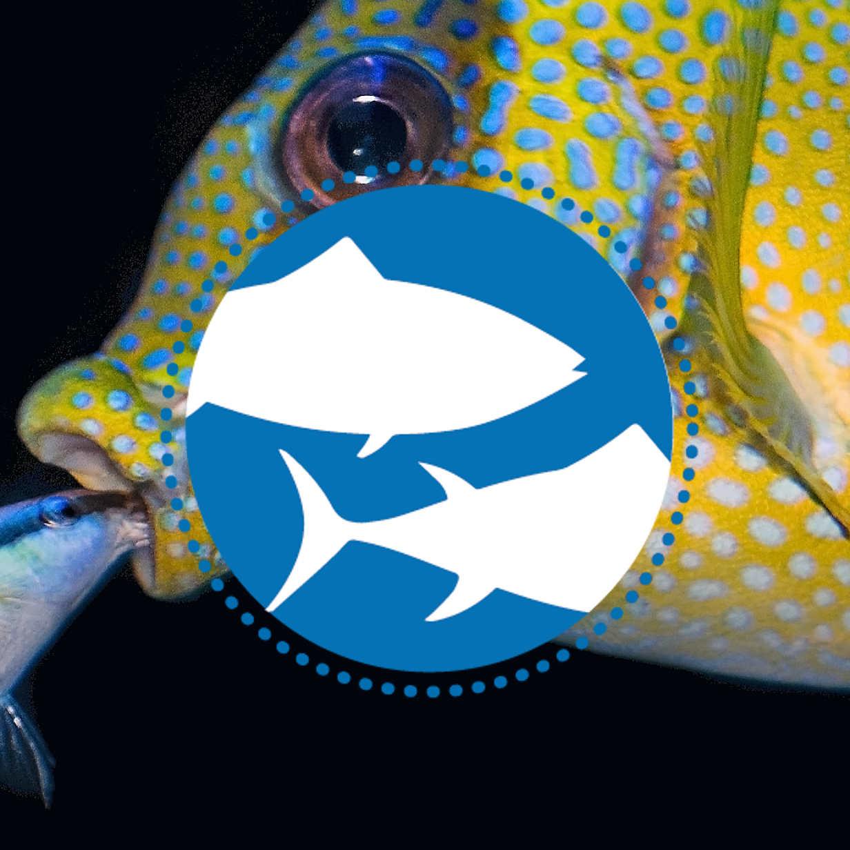 Welttag für das Ende der Fischerei – Düsseldorf