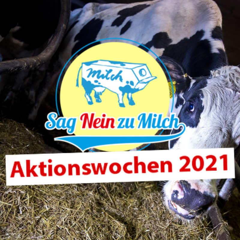 Infostand beim Ökomarkt Aschaffenburg (Sag Nein zu Milch)