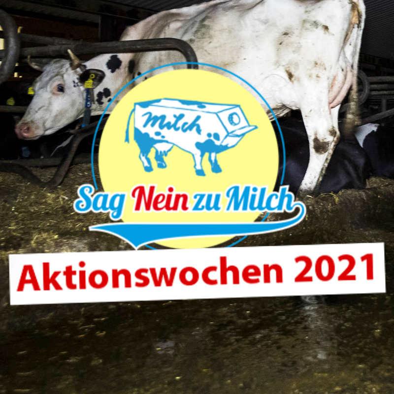 """Silent Line """"Sag Nein zu Milch"""""""