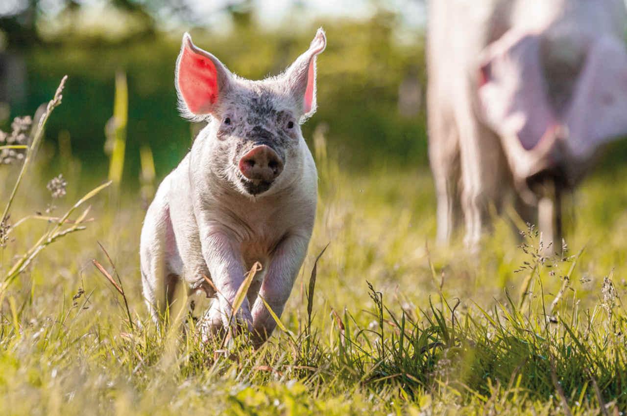 Tiere einfach leben lassen Wandkalender 2022